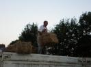 Ernte 2010