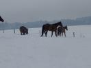 Winter 2015_33
